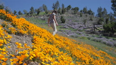 Hiker enjoys a visit to a field of bright orange California poppies Stock Footage