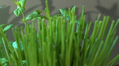 Freshly Picked Chives In Kitchen Stock Footage