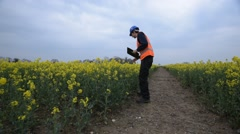 Man Inspects Crops For Crop Damage Stock Footage