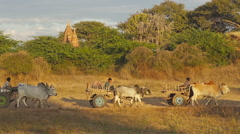Farmers riding on their Ox cart in Bagan, Myanmar Stock Footage