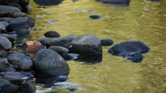 Rocks on the shore of a river during a golden sunset. Stock Footage
