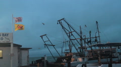 Seabirds and shrimp boats at dawn Stock Footage