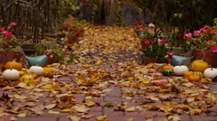 Path to the garden with flowers, pumpkins and leaves falling down to the ground. Stock Footage