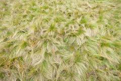 Grass texture from an alpine meadow Stock Photos