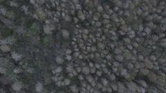 Aerial Florida Swamp-Vlog Stock Footage