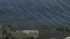 Ocean tide with seaweed Stock Footage