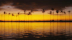 Beach sunset with tropical palm trees background defocused out of focus - stock footage