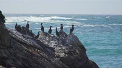 Medium shot of cormorants perched on the rocks near Spooner's Cove Beach Stock Footage