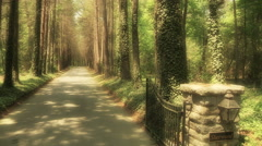 Entrance To Elegant Tree Lined Drive Stock Footage