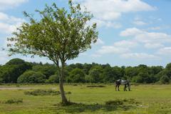Wild pony and beautiful tree The New Forest Hampshire England UK - stock photo