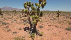Aerial shot of joshua tree cactus in the nevada desert Stock Footage