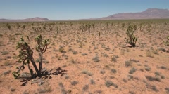 Aerial shot over joshua tree cactus in the nevada desert Stock Footage