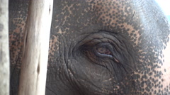 Elephant Blink Close Up - stock footage
