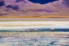 View of Laguna Verde and the Pink Flamings - stock photo