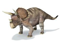 Photorealistic 3 D rendering of a Triceratops. Stock Illustration