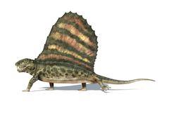 Dimetrodon dinosaur. Viewed from a side, very detailed and scientifically cor Stock Illustration