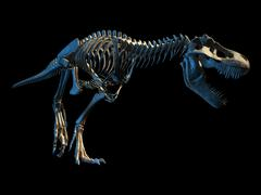 T-Rex photo-realistic full skeleton. Perspective view. Stock Illustration