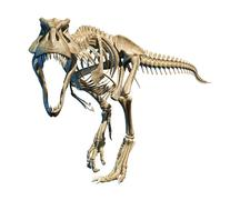 T-Rex photo-realistic full skeleton. Front view. - stock illustration