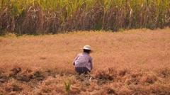 Woman working in a farming field in Myanmar Stock Footage