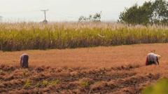 Women working in a farming field in Myanmar Stock Footage