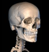 Human skull close-up. Perspective view. - stock illustration
