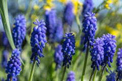 First spring flowers in April Stock Photos