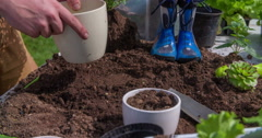 Putting a herb seedling into a new white pot plant Stock Footage