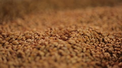 Background shot of grain dropping in pile at farm storage, wheat export quotas Stock Footage