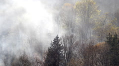 Smoke of a fire in the forest Stock Footage