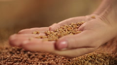 Select grain seeds dropping in human hand, spring sowing campaign, good harvest Stock Footage