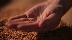Hard-working farmer holding handful of grain seeds, proud of labor results Stock Footage
