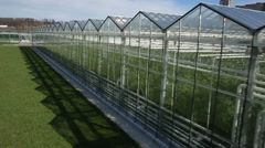 The cultivation of plants in greenhouses Stock Footage