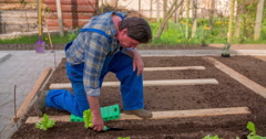 Making a hole in soil and inserting a lettuce seedling in it - stock footage