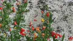 After a strong hail. Flower beds Stock Footage