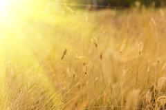 dry grass in the meadow in The morning light - stock photo