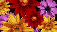 Color Flower - stock footage