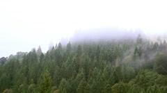 Misty haze over the trees Arkistovideo