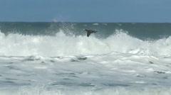 seabird cormorant flying sea spray ocean - stock footage