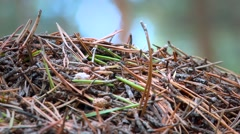 Anthill, telephoto lens Stock Footage