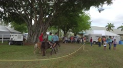 Pony ride in the park Stock Footage