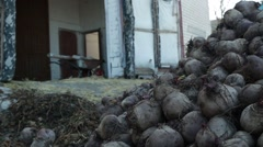 A Bunch of Beets at Entrance to House in National Reserve Stock Footage