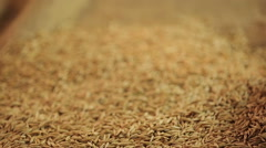 Man holding handful of select oat grain, organic oatmeal production, agriculture Stock Footage