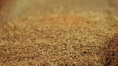 Male farmer hands pouring ripe rye grain, harvest season in agriculture business Stock Footage