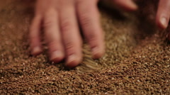 Farmer checking quality of raw material for flaxseed oil, beauty and healthcare Stock Footage