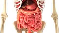 Human body and internal organs 3d rendering - stock illustration