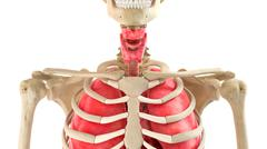 Human body and internal organs 3d rendering Stock Illustration