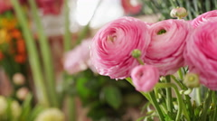 Beautiful pink flower in florist shop. Close up. Focus pulling - stock footage