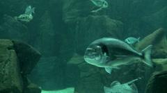Aquarium in Madeira island - Portugal Stock Footage