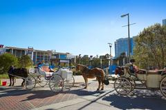 Houston Discovery green park horse carriages - stock photo
