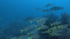 A bevy of different tropical fish on a morning feeding. Stock Footage